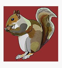 Pop Art Squirrel (Nutty McNibbles) Photographic Print