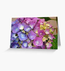 Multi-color Hydrangea Greeting Card