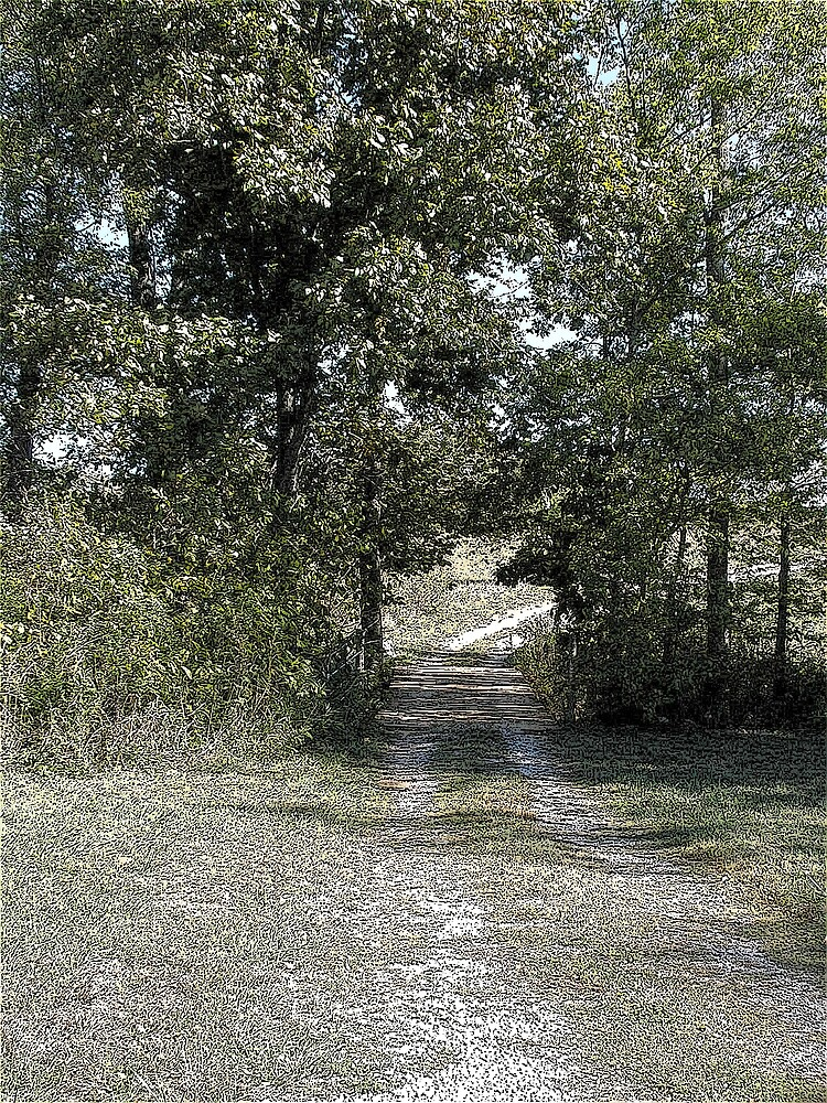 The Path by C Hudgins
