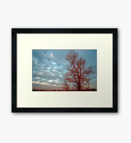 Red Tree Framed Print
