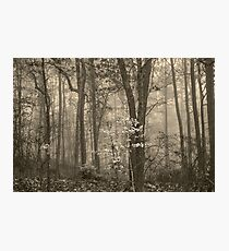 Beauty Within Photographic Print