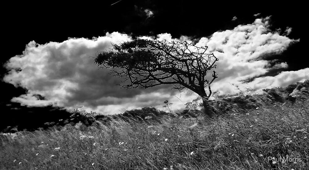 Windswept Tree - Beachy Head by Paul Morris
