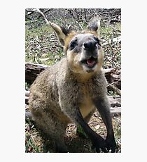 Wallaby Kisses Photographic Print