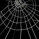 Spiderweb product Design by relayer51