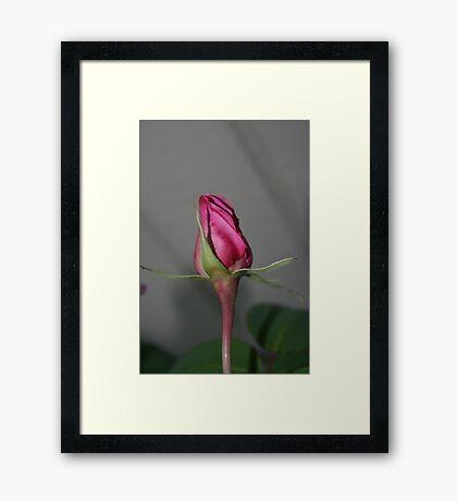 BALLERINA GIRL Framed Print