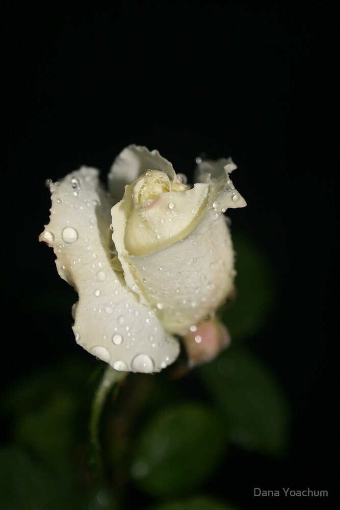 CRYING IN THE NIGHT by Dana Yoachum