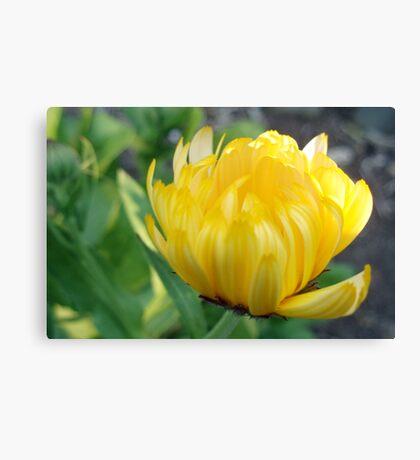 Sunshine in bloom Canvas Print