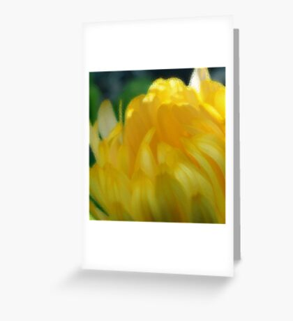 Sunshine in Bloom - the Painting Greeting Card