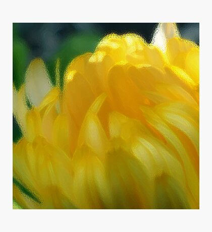 Sunshine in Bloom - the Painting Photographic Print