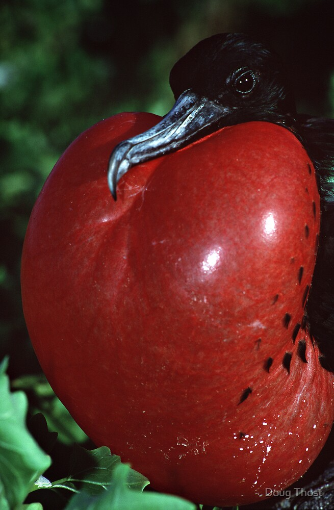 It's big, it's red, and it's all yours baby... by Doug Thost