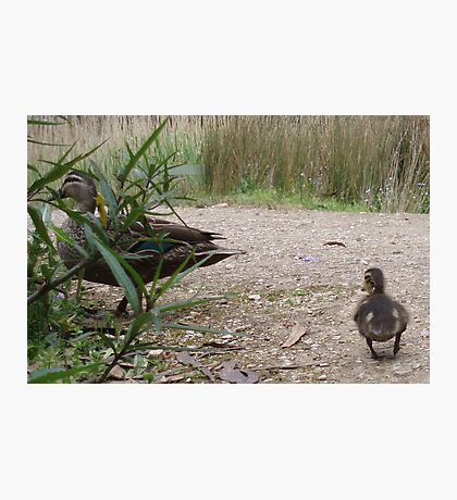 Mother Duck, Wait Wait Photographic Print