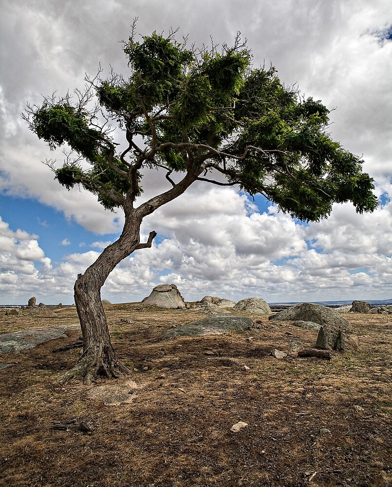 Portrait of a Tree by RobYoung