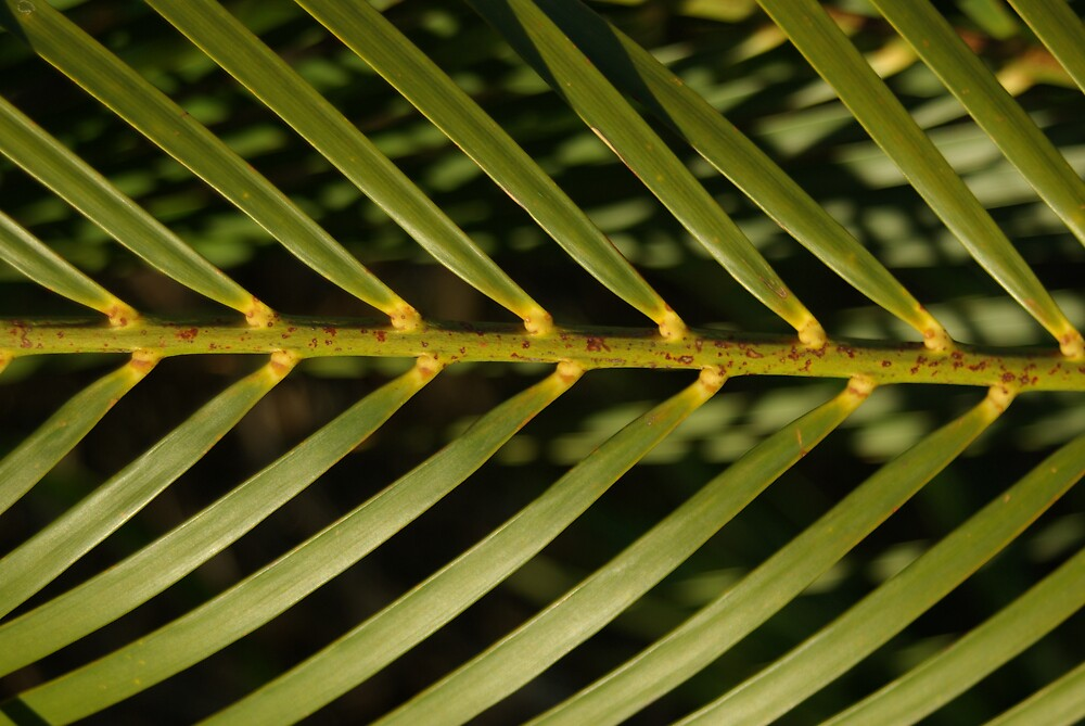 A Frond...Flinders Foreshore by Peter Rowley