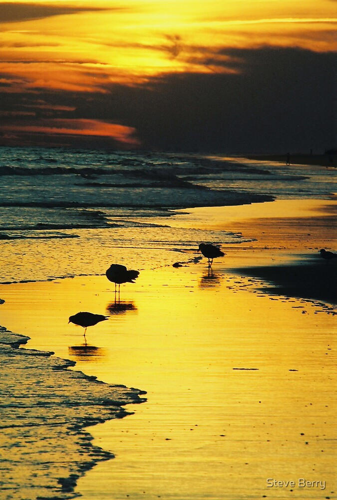 birds and sunset by Steve Berry