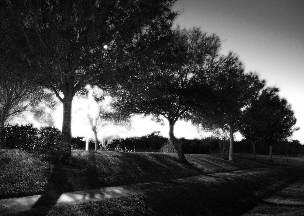 Night Trees by Taylor Jury