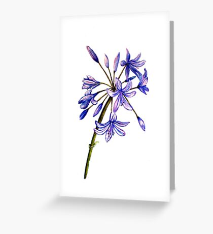 Agapanthus - Flowers Greeting Card
