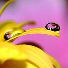 Precious Drops by ~ Fir Mamat ~