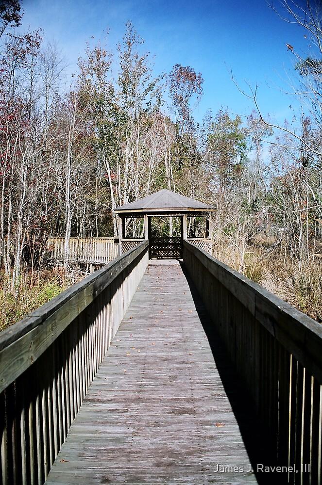 Swamp Walk by James J. Ravenel, III