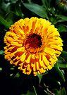 Yellow Flower by Dave Lloyd