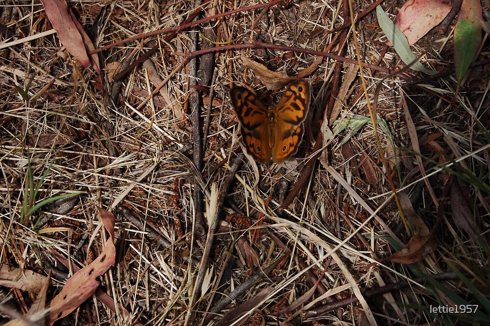 butterfly by lettie1957