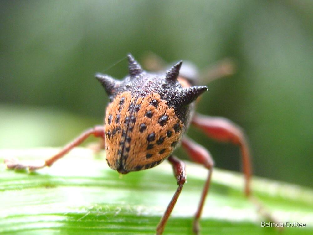 horny bug by Belinda Cottee