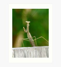Just hangin' out here!! Art Print