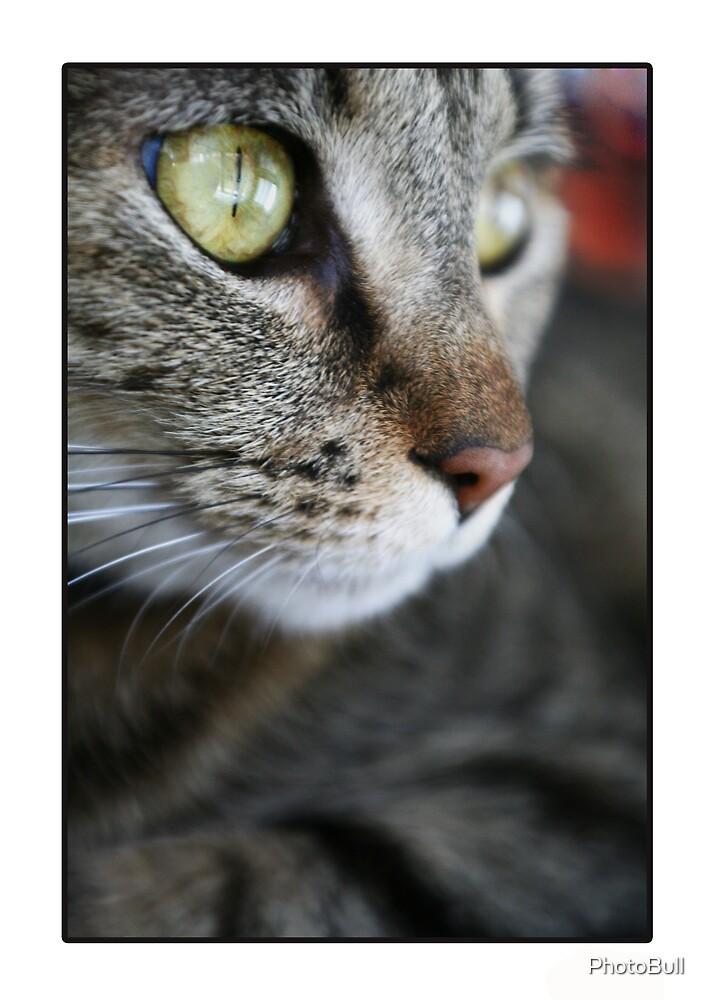 Amy The Cat by PhotoBull