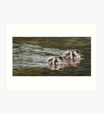 Hastening - Paradise Shelduck Ducklings Art Print