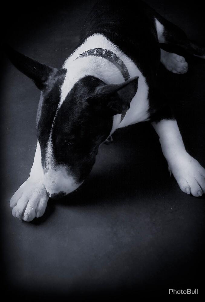 Bronson by PhotoBull