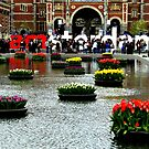 Tulips from Amsterdam by jchanders