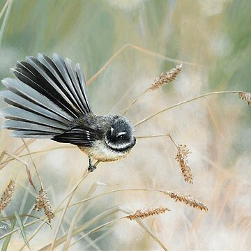 Morning Light - Fantail by MCColyer