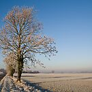 Frosty Morning #4 by David Pearson