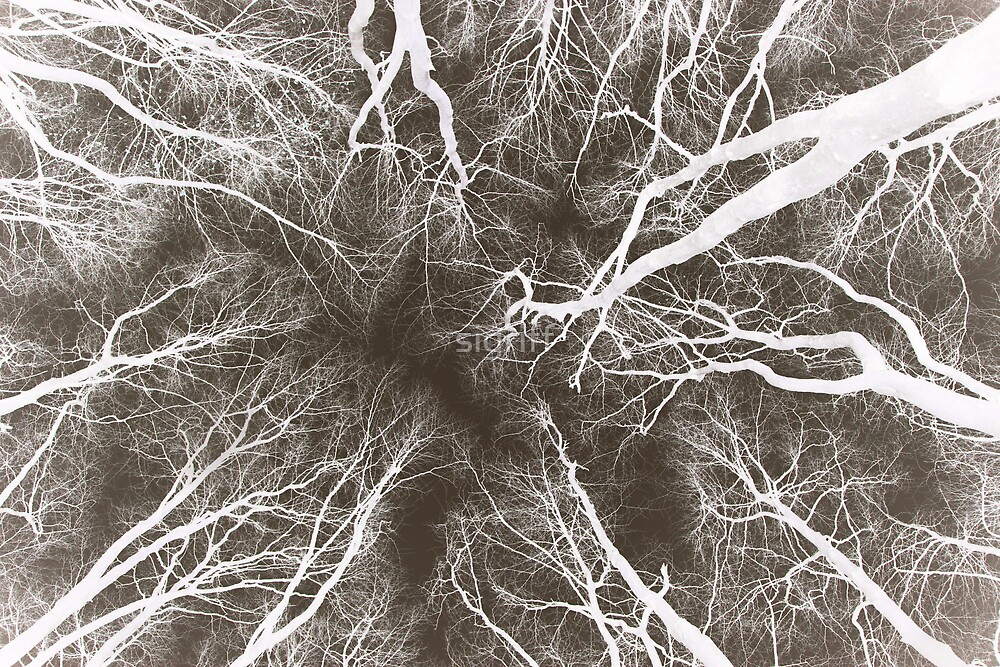 Root or Branch v 02 : Photography by Alys Griffiths by sigriff