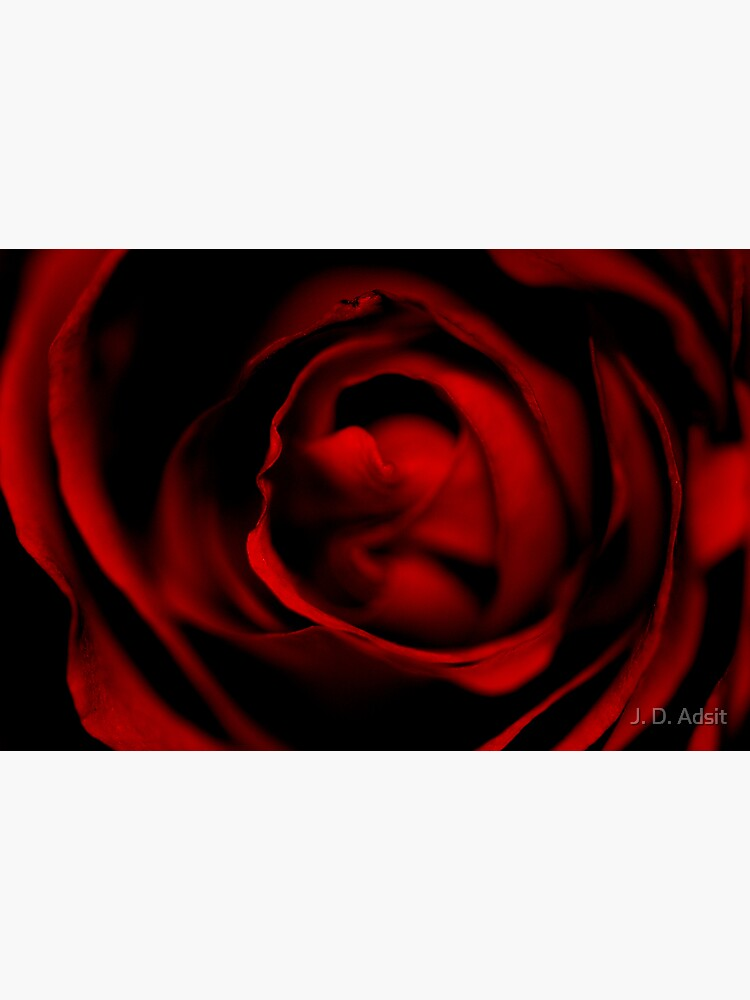 Entering the Rose by adsitprojectpro