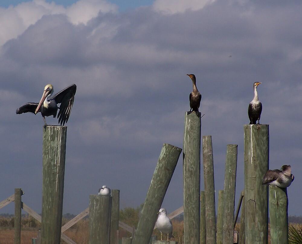 pelicans by sherrikl