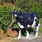 A Cow in Cowaramup by lezvee