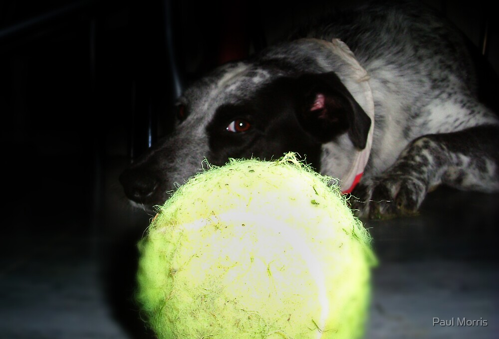 Leave my ball alone by Paul Morris