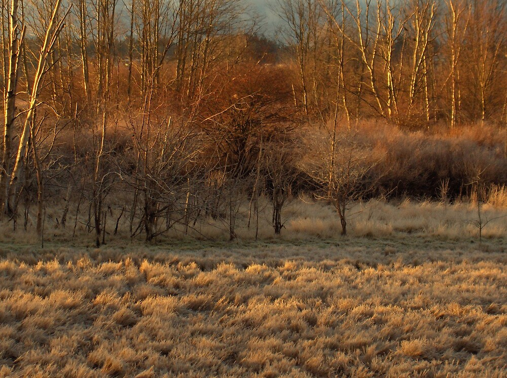 Morning frost in the marsh. by hanne
