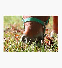 Autumn muzzle Photographic Print