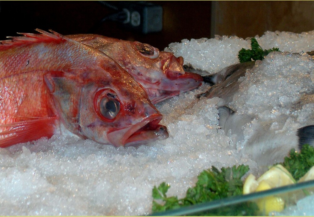 Red Snapper by hanne