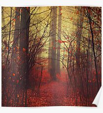 the way in - mysterious misty woodland Poster