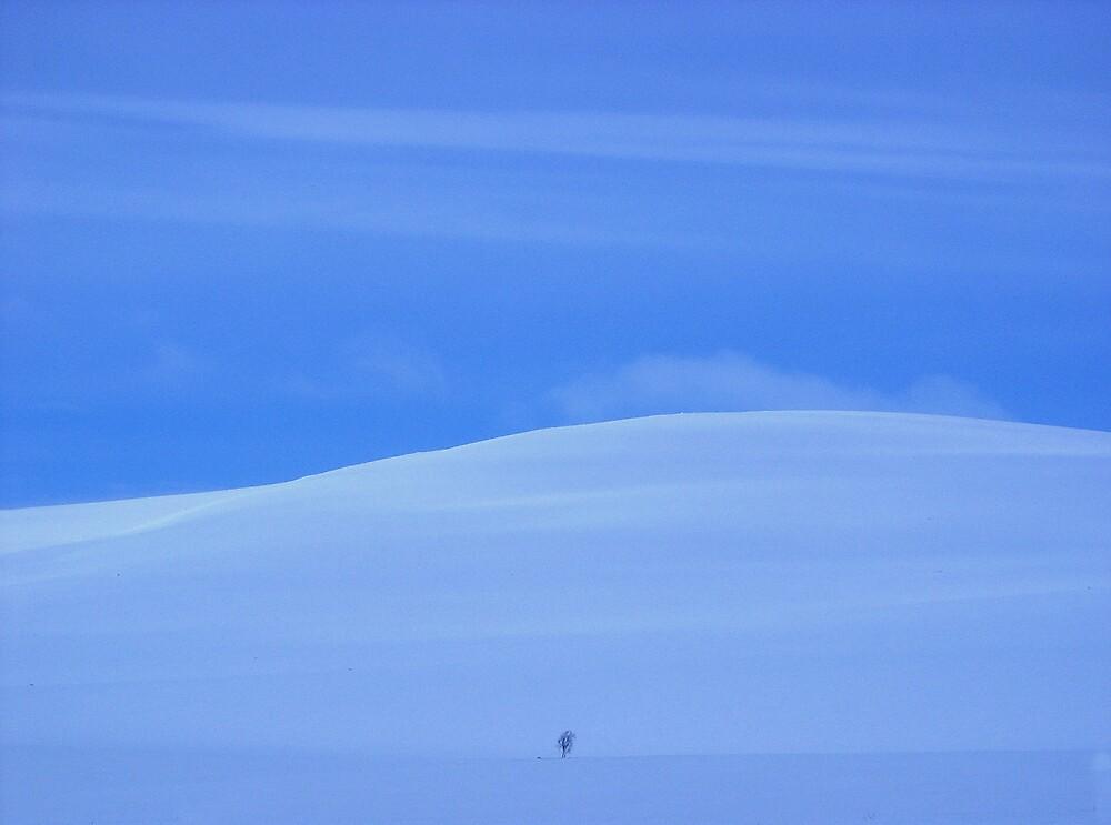Winter blue by Loklok