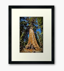 Grizzly Giant Sequoia - Mariposa Grove - Yosemite - California - USA Framed Print