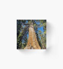 Grizzly Giant Sequoia - Mariposa Grove - Yosemite - California - USA Acrylic Block