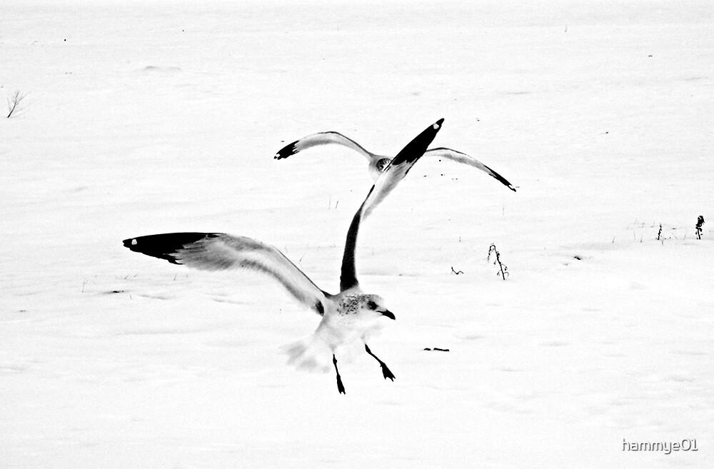 Birds of a Feather by hammye01