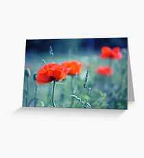 red poppy and natural background Greeting Card