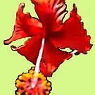 Red Hibiscus by DAdeSimone