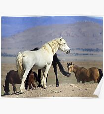 Unbridled Beauty Poster