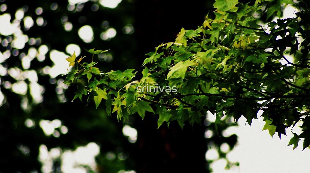 leaves by srinivas