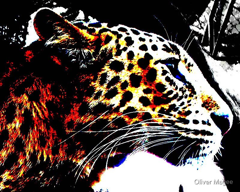 leopard print by Oliver Magee